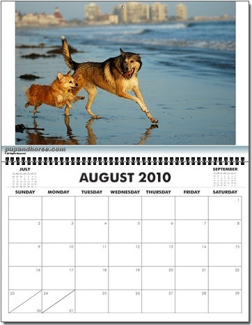 Pet Portrait Photography Calendar